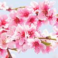 Peach Flowers by Irina Afonskaya