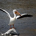 Pelican by FL collection