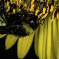 Pollen Collector 3 by Jay Stockhaus