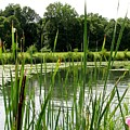 Pond At Beaver Island State Park In New York by Rose Santuci-Sofranko