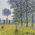 Poplars In The Sunlight by Claude Monet