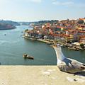 Porto Skyline Seagull by Benny Marty