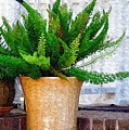 Potted Plant by Donna Bentley