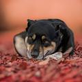 Puppy by Dorothy Binder