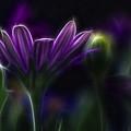 Purple Daisy by Stelios Kleanthous