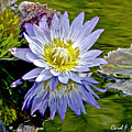 Purple Water Lily Pond Flower Wall Decor by Carol F Austin