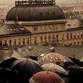 Rain by Bert Mailer