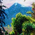 Rain Forrest by Stan Hamilton