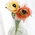 Ranunculus by Kati Finell