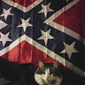 Rebel Cat by Frederick Holiday
