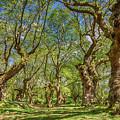 Relaxing Planes Trees Arbor by Tsafreer Bernstein
