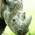 Rhino by Shaun Wilkinson