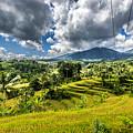 Rice Terrace by Jijo George