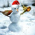 2 Robins On A Snow Man by Nigel Photogarphy