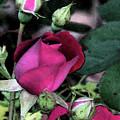 Rosebud by Michele Caporaso
