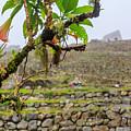 Ruins Of  Machu Picchu by Eyal Aharon