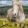 Rustic Horse by Nick Bywater