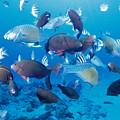 Saipan Marine Life by Dave Fleetham - Printscapes