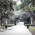 Savannah by Mindy Newman