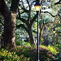 Savannah Spring Perspective by Carol Groenen