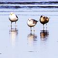 Sea Birds by Angus Hooper Iii