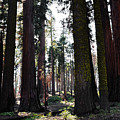 Sequoia National Park by Kyle Hanson