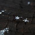 Snowflake by Jolene Smith