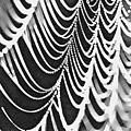 Spider Web by Lora Battle