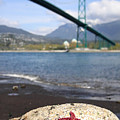 Starfish Stanley Park Vancouver by Pierre Leclerc Photography