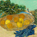 Still Life Of Oranges And Lemons With Blue Gloves by Mountain Dreams