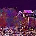 Stork Bird Fly Plumage Nature  by PixBreak Art