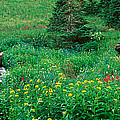 Stream And Alpine Flowers, Ouray by Panoramic Images