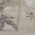 Study For The Unruly Calf by Winslow Homer
