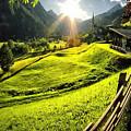 Sunbeam by Zia Low