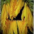 Sunflower 1134 by Bob Neiman