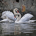 Tango Of The Swans by Joachim G Pinkawa