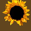 Sunflower Stretching On Brown by Heather Joyce Morrill