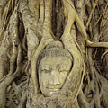 Thailand, Ayathaya by Gloria & Richard Maschmeyer - Printscapes