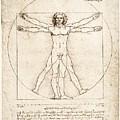 The Proportions Of The Human Figure by Leonardo Da Vinci