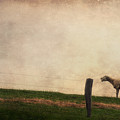 The Sheep by Angela Doelling AD DESIGN Photo and PhotoArt
