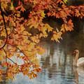 The Swan by Cathy Kovarik