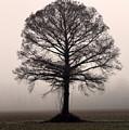 The Tree by Amanda Barcon