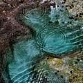 Tide Pool by Craig Wood