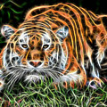 Tiger Collection by Marvin Blaine