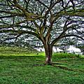 Tree by Galeria Trompiz