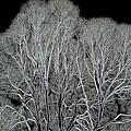 Trees by Vladimir Kholostykh