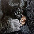 Tribute To Koko by Stan Hamilton