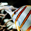 Tropical Fish by Brenton Woodruff