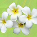 Tropical Frangrapani by Karen Lewis