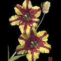 Tulip by Lloyd Liebes